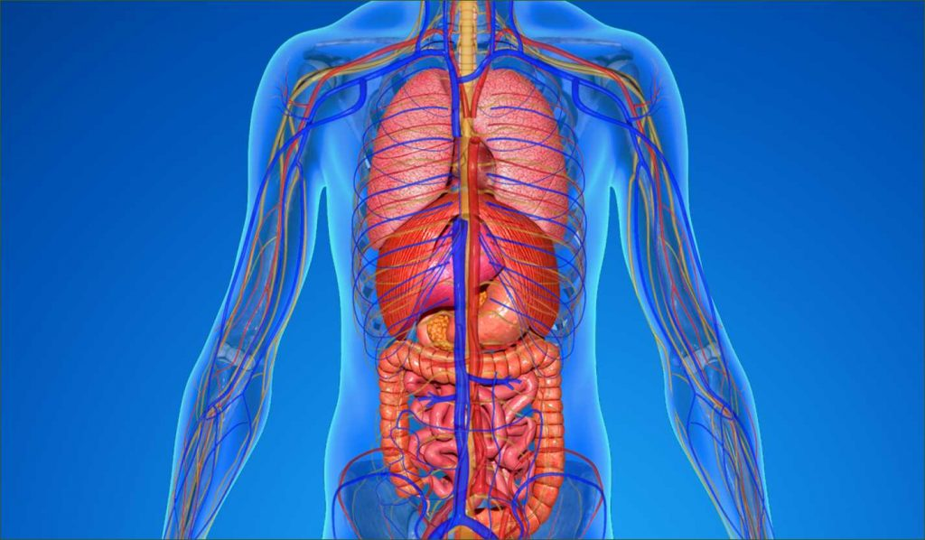 The Non-Alcoholic Fatty Liver Disease Solution 2020 Program Review