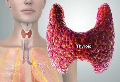 Jodi Knapp's The Hypothyroidism Solution Book