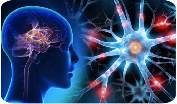 Memo Defend Memory Loss Support Formula