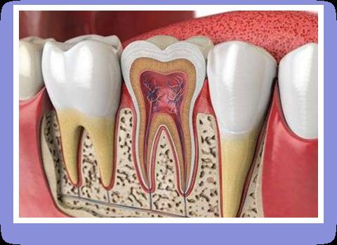 Primal Life Organics LED Teeth Whitening System Review