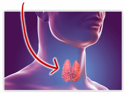 The over-40 Thyroid Detox Formula Ingredients
